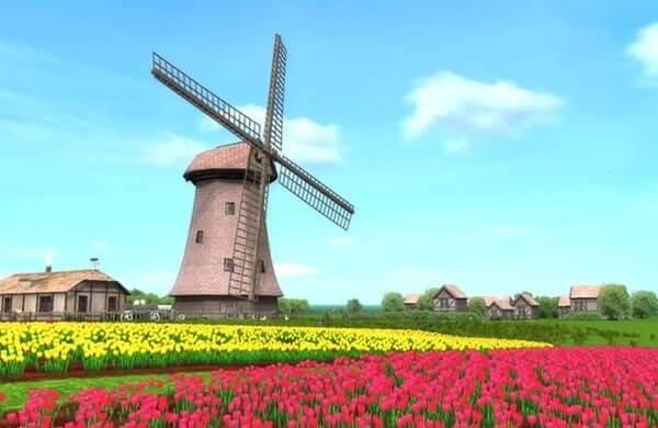 dac-trung-hoa-tulip-coi-xoay-gio-ha-lan